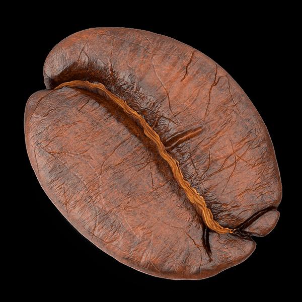 ziarno kawy arabika
